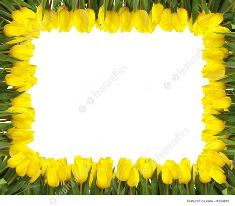 border design flower yellow yellow tulips frame picture