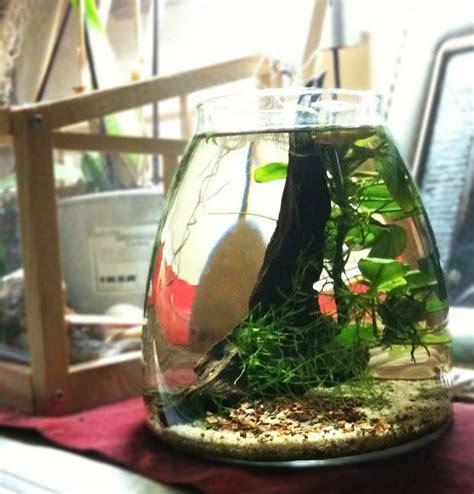 vaso vetro ikea caridine cherry in un vaso ikea