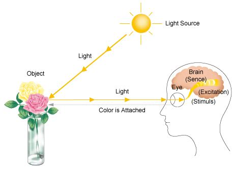 what is a process color process of recognizing colors knowledge on color and light