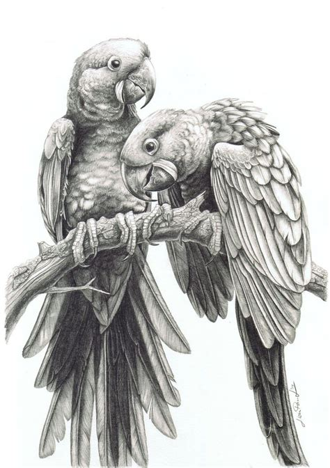 pin by tim irvin on pencil drawing pinterest drawings