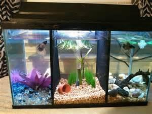 Betta Fish Tank Pinterest'te   Beta Bal???, Betta ve Betta