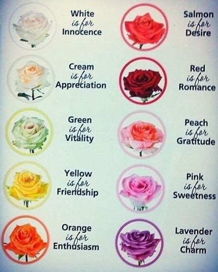 what does the color stand for color meaning of roses nature color