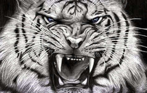 hasil foto macan  imut  gambar harimau putih