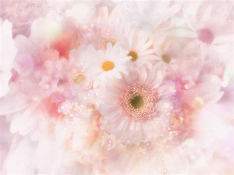 Flower Soft Hp by Soft Flower Background Wallpapers The Musaka Wallpapers