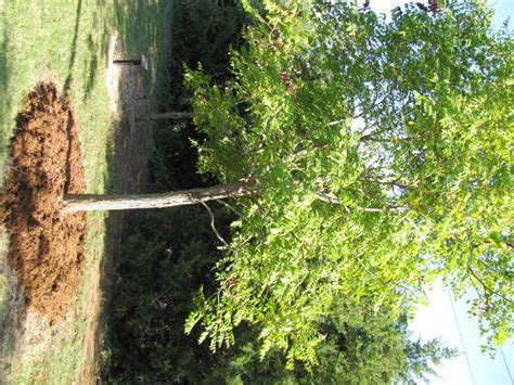 compost for fruit trees edmond ok official website mulch is your tree s best