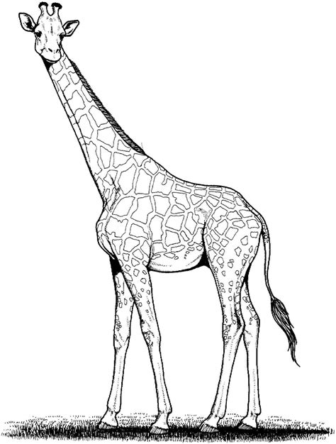 giraffe free coloring pages