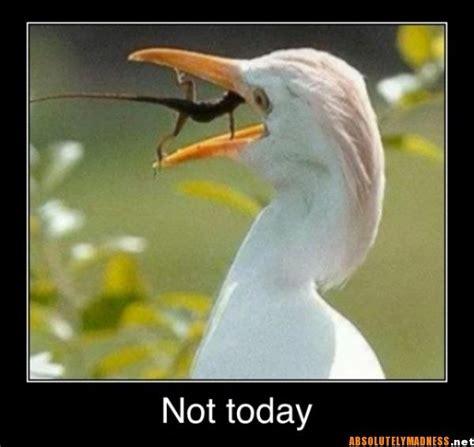 Lizard Toast Meme - funny lizard memes