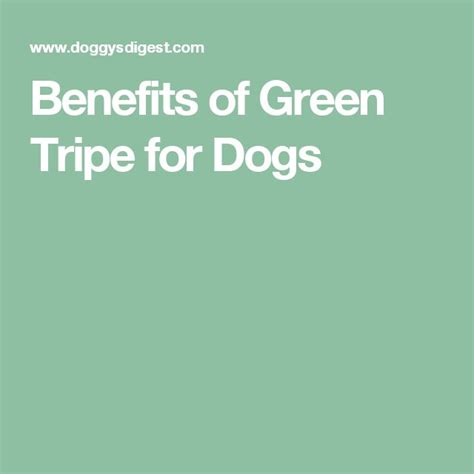 green tripe for dogs the 25 best green tripe ideas on tripe for dogs food and
