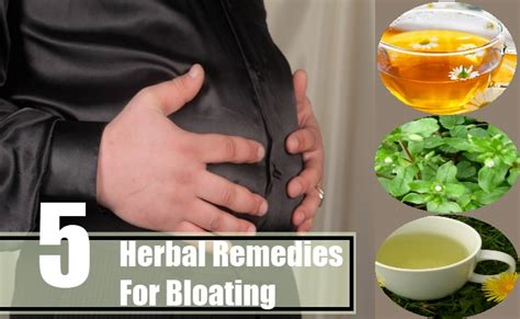 Home Remedy For Bloating by 5 Herbal Remedies For Bloating Best Herbs For Bloating