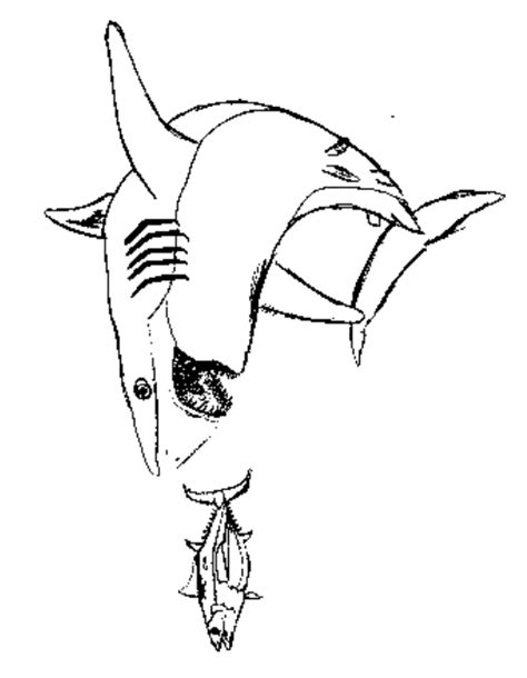 basking shark coloring page basking shark coloring free animal coloring pages sheets
