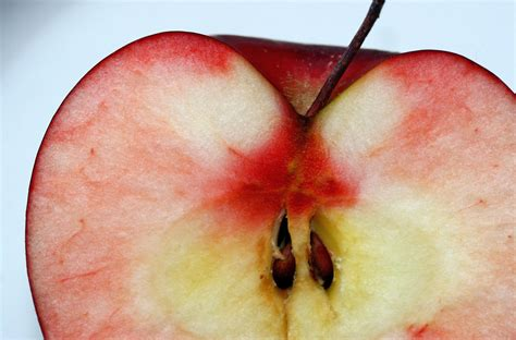 have you eaten apples seeds or cherry pits