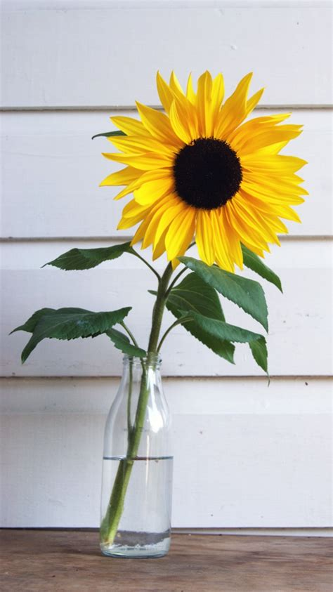 Sunflower Tumblr Wallpapers High Definition   Nature HD