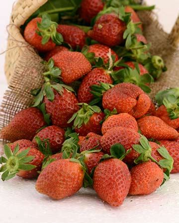 fruit 66 ingredients strawberry recipes strawberry desserts strawberry indian