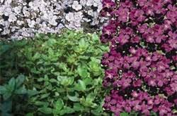 Low maintenance ground cover gardens pinterest