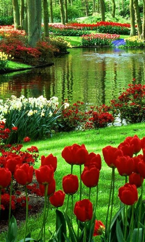 a beautiful flower garden 25 best ideas about flowers on