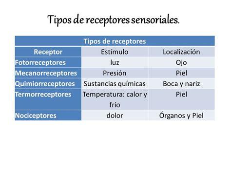 los receptores sensoriales unidad n 176 5 los receptores sensoriales ppt descargar