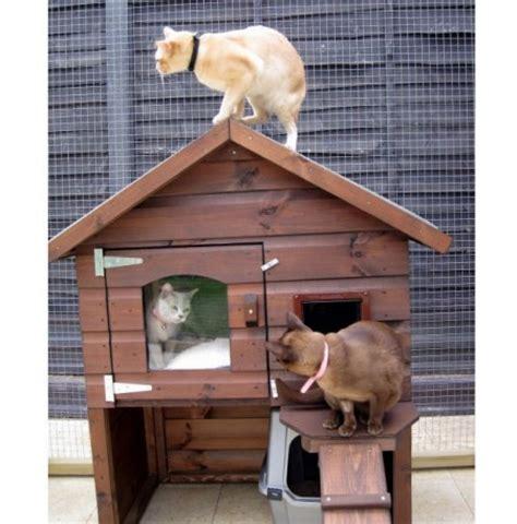 petsmart cat house outdoor cat house petsmart cats pet photos gallery 1gw2onxk9e