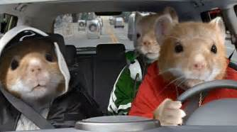 Kia Hamster Kia Hamsters Ready To Return For New Batch Of Soul Ads