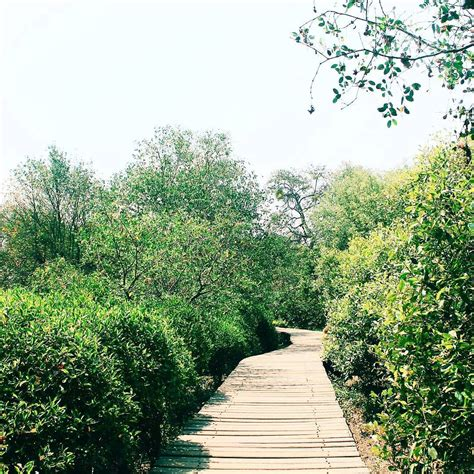 wisata alam hutan mangrove wonorejo  hijau penyelamat