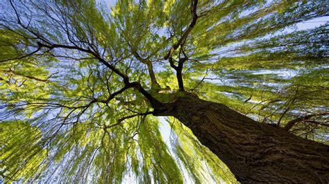 wallpaper hd 1920x1080 tree baum full hd wallpaper and hintergrund 1920x1080 id 313133