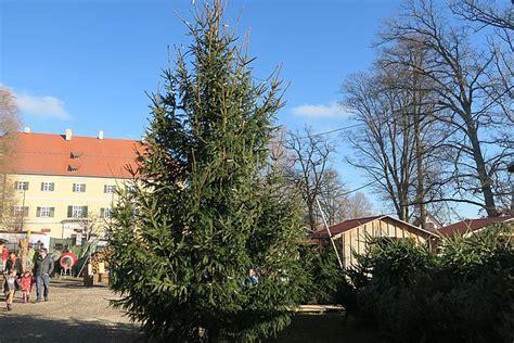 christbaum selber schlagen badisch tannenbaum selber schlagen m 252 nchen eufaulalakehomes