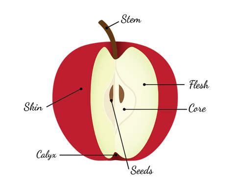 apple diagram washington apple commission