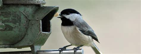 what bird feeders attract birds home improvement
