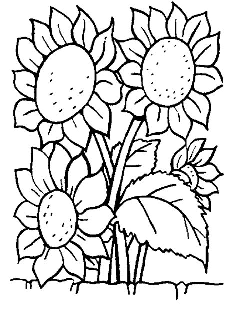 coloring pages of flowers print some common variations of the flower