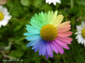 flowers pictures pack of many rainbows images rainbow flowers hd wallpaper