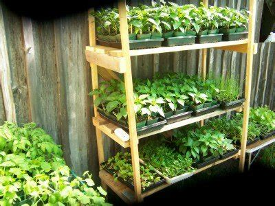 Backyard Business Ideas Start A Backyard Nursery Business