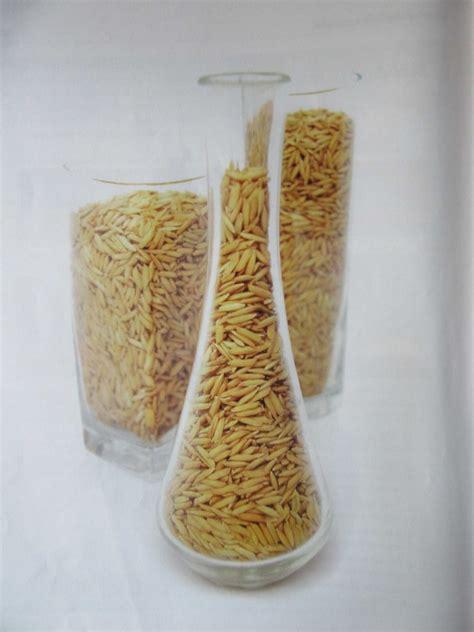 Bibit Ikan Nila Pasuruan majalah trubus exo padi