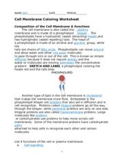 cell membrane coloring worksheet answers cell membrane coloring worksheet name key date period