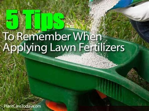 lawn fertilization how to feed and fertilize for healthy grass