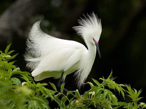 lovely white aves fondos de pantalla taringa
