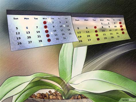 orchidea come bagnarla come favorire la fioritura delle orchidee 12 passaggi