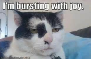 Sarcastic Cat Meme - funny photos memes