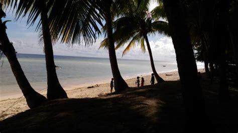 animasi pohon kelapa di pantai