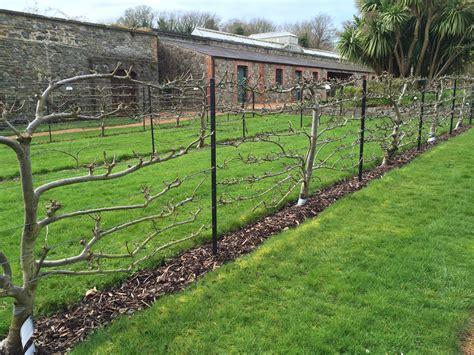 top wire cordon trellis espalier the of taming nature no 4 jardin