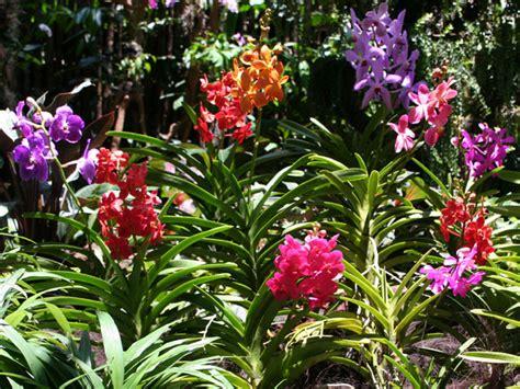 imagenes de jardines con orquideas imagenes bonitas con flores y plantas 3 170 parte cerrado