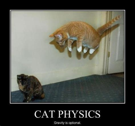Funny Physics Memes - 26 best images about physics memes on pinterest cats
