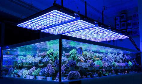 Led Aquarium Lighting german store displays beautiful coral atlantik v4 led