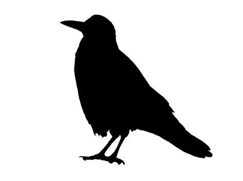 saraccino crow stencil