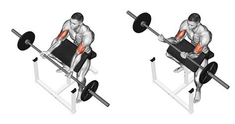 preacher curl bench exercises bicep workout giant sets for giant biceps
