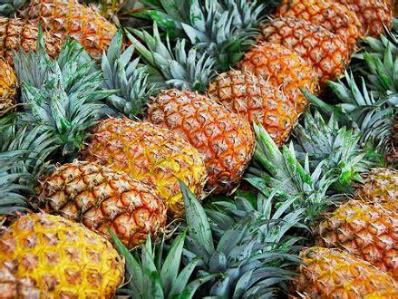 Culture D Ananas by Ananas Planter Un Ananas Jardinage Bio