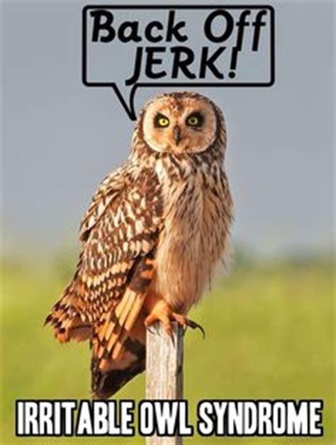 Owl Birthday Meme - 1000 images about best short jokes on pinterest best