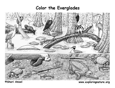 exploring nature coloring pages everglades coloring page