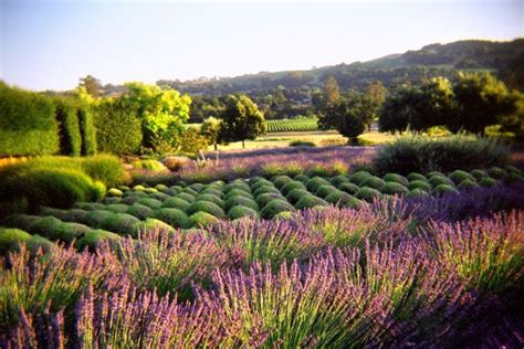 17 best images about winery design on pinterest gardens the old and vineyard