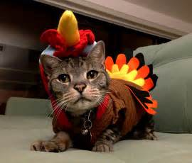 ask einstein can cats eat thanksgiving turkey catster