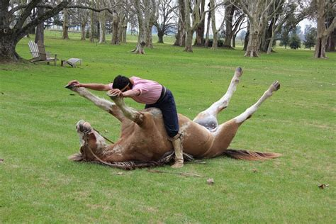 due persone fanno l a letto il vero uomo sussurra ai cavalli ed 232 anche