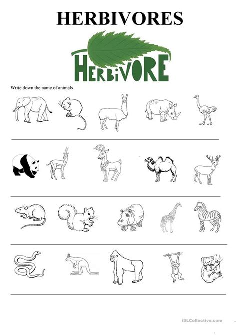printable wild animal pictures all worksheets 187 wild animals worksheets for grade 1